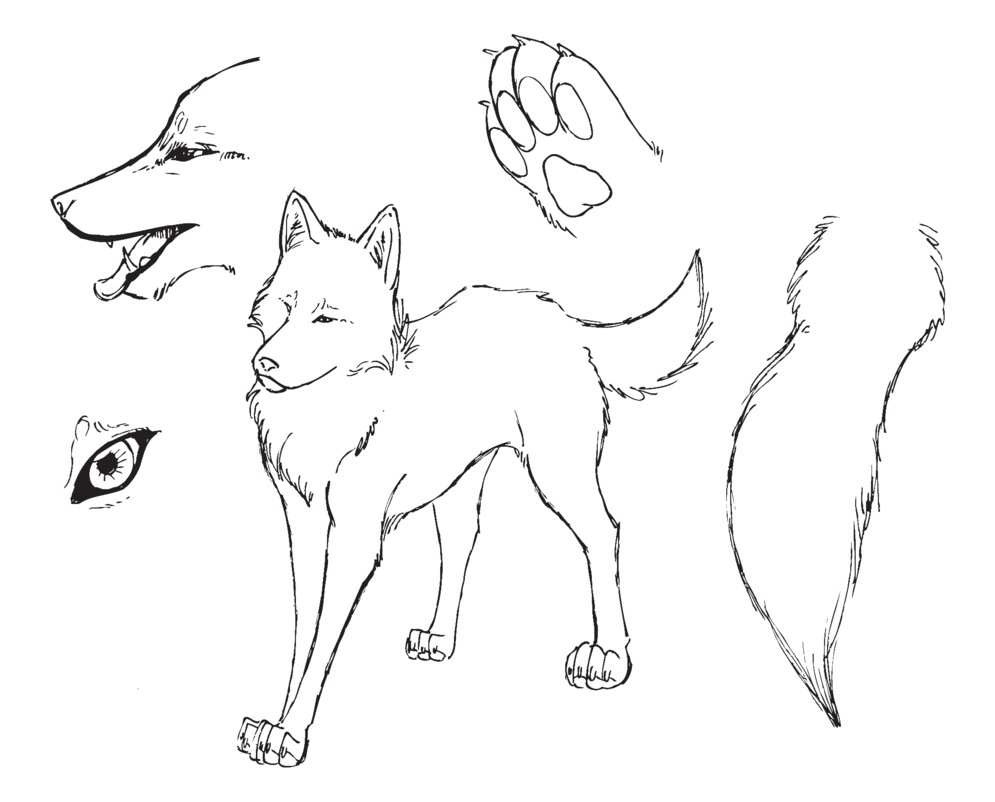 Wolf_ref_lineart_by_Nightabsol.png