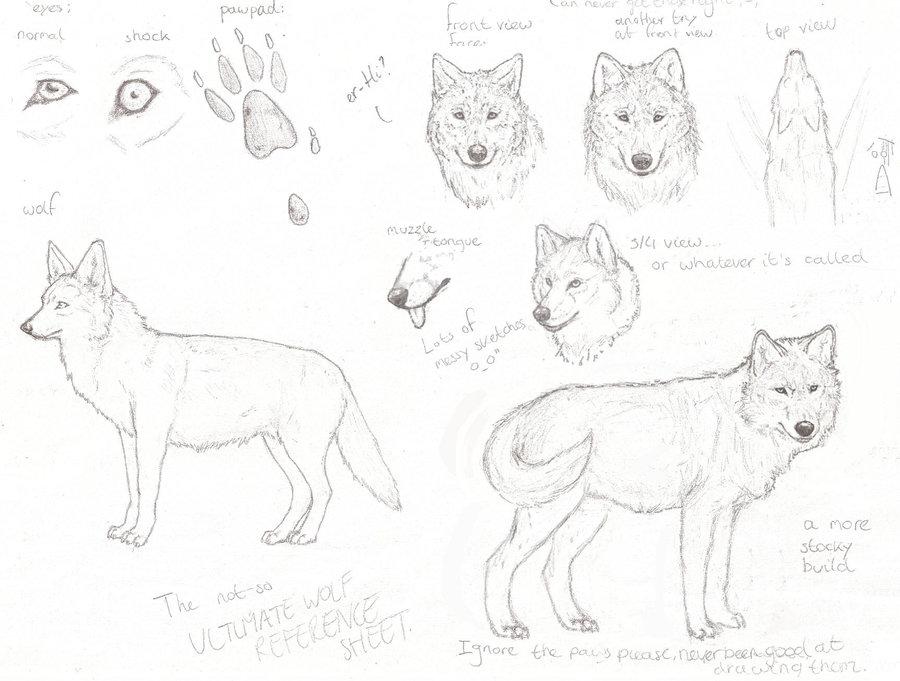 wolf_reference_sheet_sketch_by_ydera-d1kbnbw.jpg